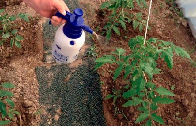 Паутинный клещ на огурцах в теплице борьба: меры и фото, болезни томатов