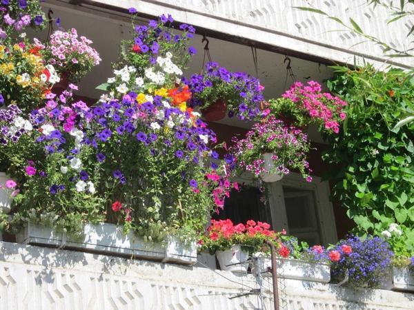 Оформление балкона: цветы и дизайн, подставки ампельные, украсить растения красиво, фото и озеленение своими руками