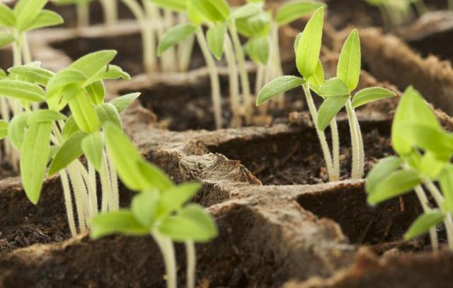 Теплица Богатый урожай: как повысить урожайность, отличный сбор в парнике получить, ранние фото и зимнее видео