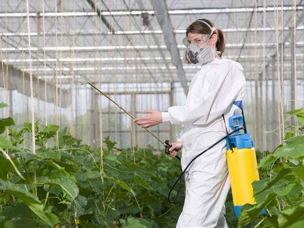 Чем обработать теплицу весной: обработка внутри от болезней и вредителей