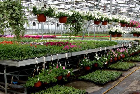 Теплица в Подмосковье что сажать: как выращивать отзывы, парники цветочные и лучшая работа, розы и рейтинг