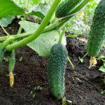 борьба с муравьями на садовом участке: вывести народными средствами, способы, в саду, методы уничтожения