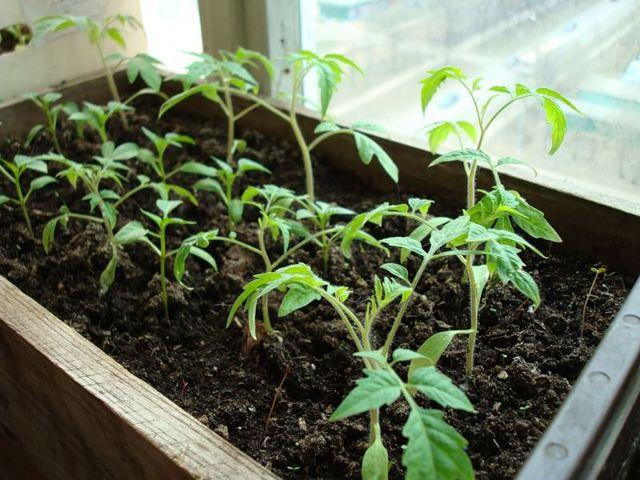 Посадка растений в теплице: как высаживать и сажать, жук ест и что разместить в парнике, выращивание системы