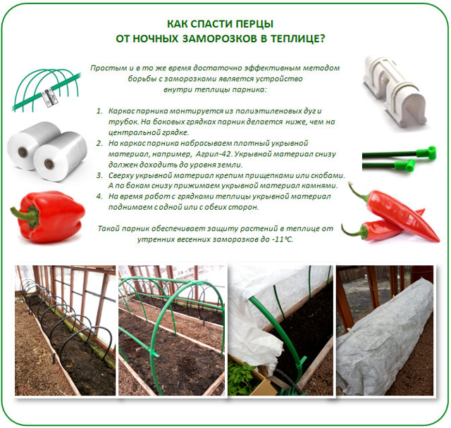 рассада в теплице перца: высадка лучших семян, выращивание сладкого
