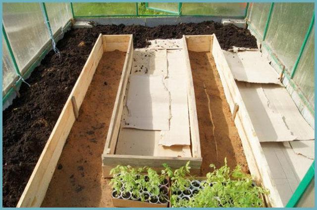Совместимость овощных культур при посадке в теплице: совместные растения из поликарбоната, посадка совмещенная