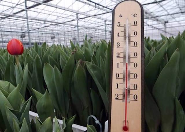 оптимальная температура и влажность в теплице
