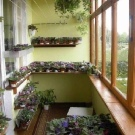 Зимний сад на балконе: на лоджии оранжерея, фото и идеи своими руками, в квартире растения, зимой как устроить