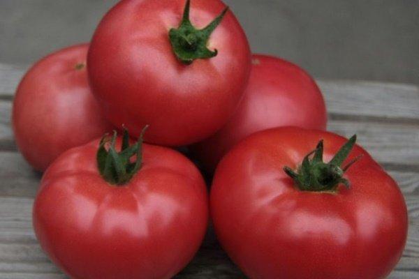 Сладкие сорта томатов для теплиц: самые сладкие помидоры, отзывы