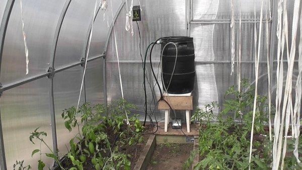 Автополив в теплице: автоматический полив Аквадуся, система микрокапельного полива без вашего участия своими руками
