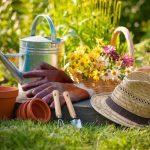 Удобрения для огурцов в теплице: зола для почвы и навоз, грунт и минеральная земля, в парнике препараты