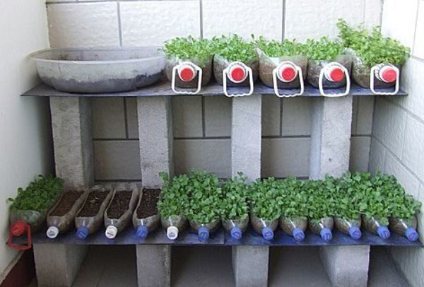 Огурцы на балконе: балконное выращивание, на окне пошагово, как вырастить в пластиковых бутылках, отзывы и сорта