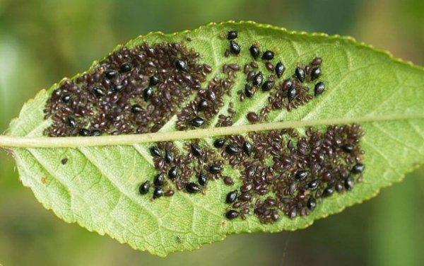 Обработка теплицы от паутинного клеща весной, меры борьбы с вредителем (в том числе на огурцах) и профилактика заражения растений, фото
