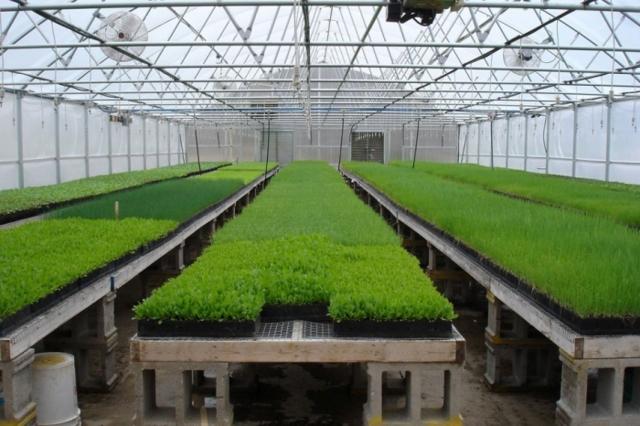 Бизнес-план теплицы: рентабельность тепличного хозяйства, выращивание выгодное, продажа круглогодичная и зимняя