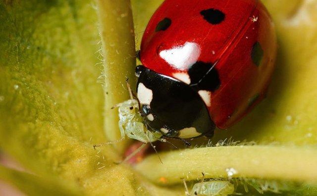 Белокрылка на помидорах в теплице: на томатах как избавиться, борьба и методы