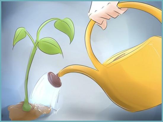 Как ухаживать за перцем в теплице