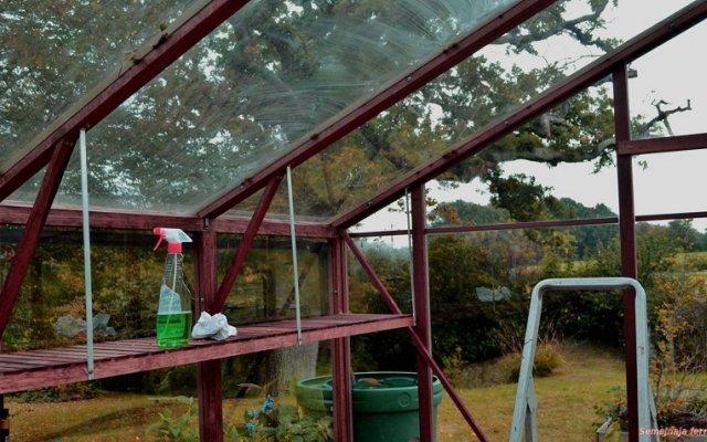 Фитофтора в теплице из поликарбоната: обработать осенью йодом, избавиться, делать профилактику в парнике