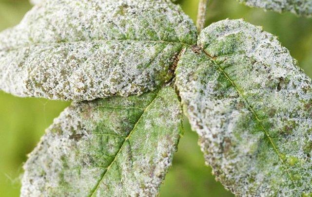 Обработка теплицы осенью: чем и как обработать из поликарбоната, от болезней и вредителей, подготовка земли к зиме