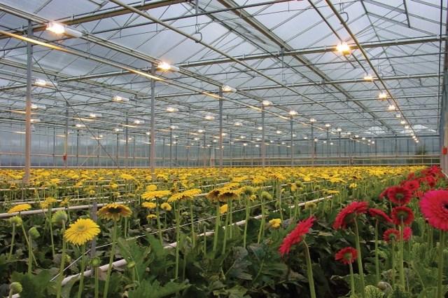 Освещение для теплиц: зимние светодиоды из поликарбоната, отопление какое должно быть, расчет круглогодичный